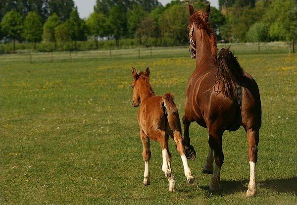 Informatie Over Paardenrassen Paardenrassen